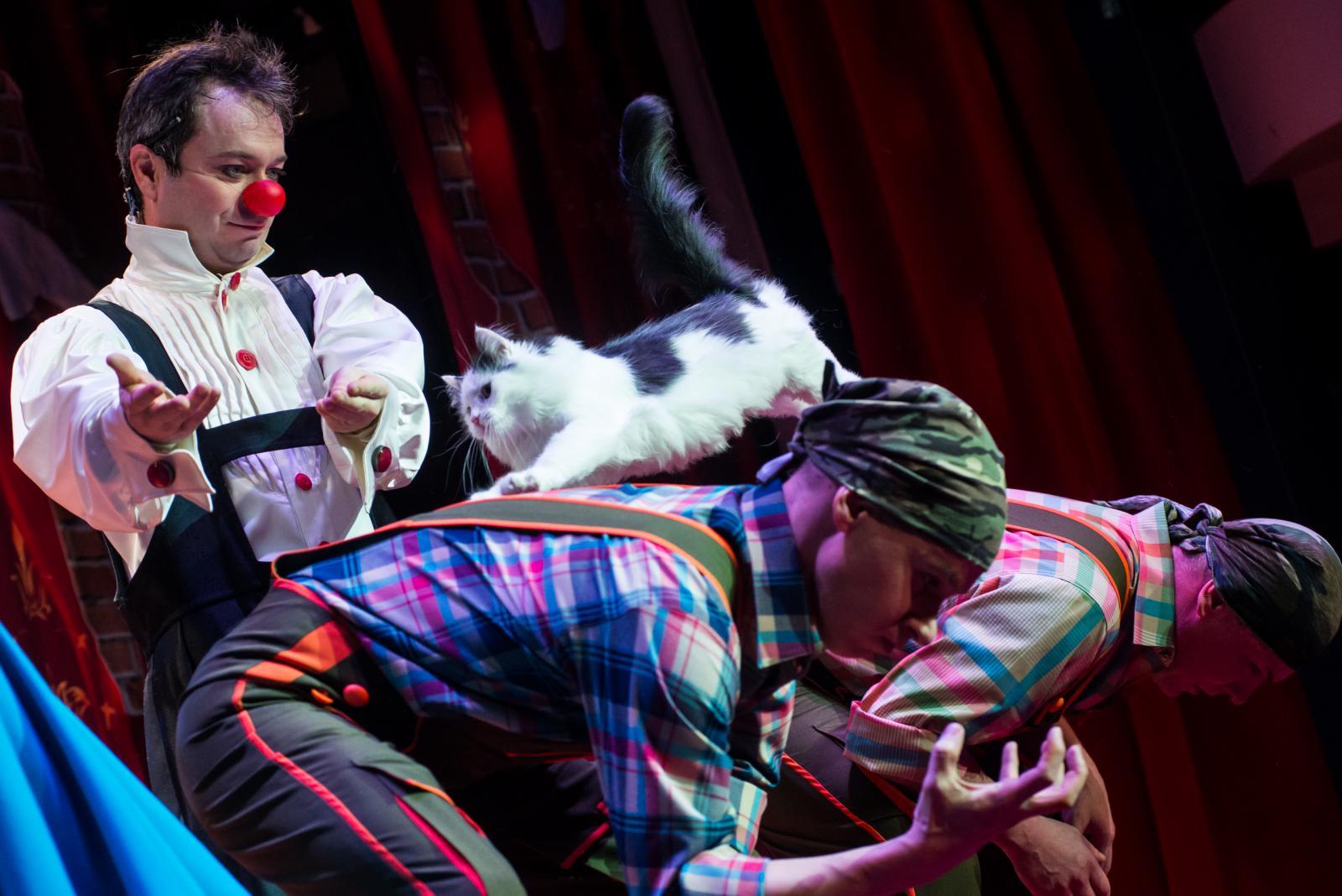 картинки кот в театре природных неровностей нанести